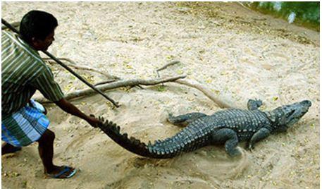 Crocodile Park Chennai