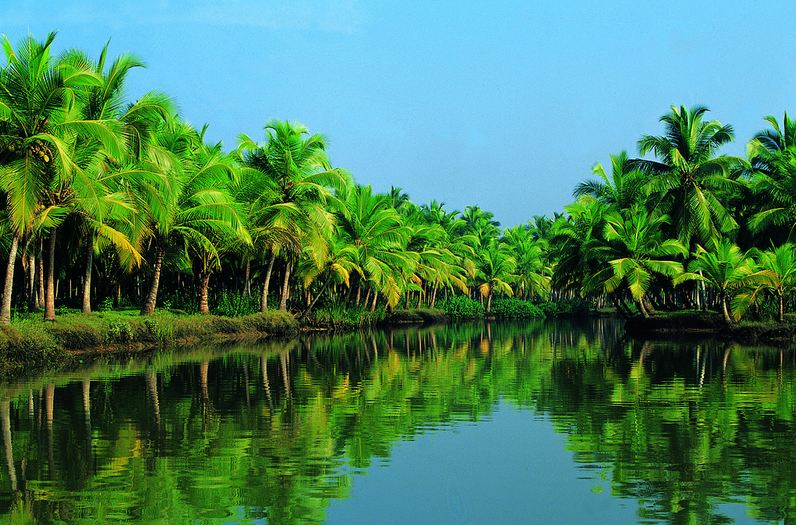 Beautiful view of Coconut Trees in Kerala