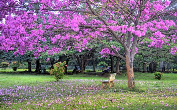 Cubban Park Bangalore