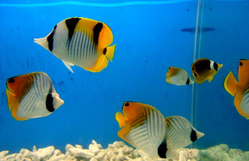 Aquarium Bangalore Cubbon Park